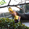 Widely Used Easy To Operate Pruning Shears for Farm Field